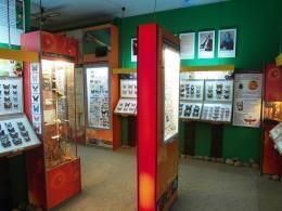 Muzeum motyli 1