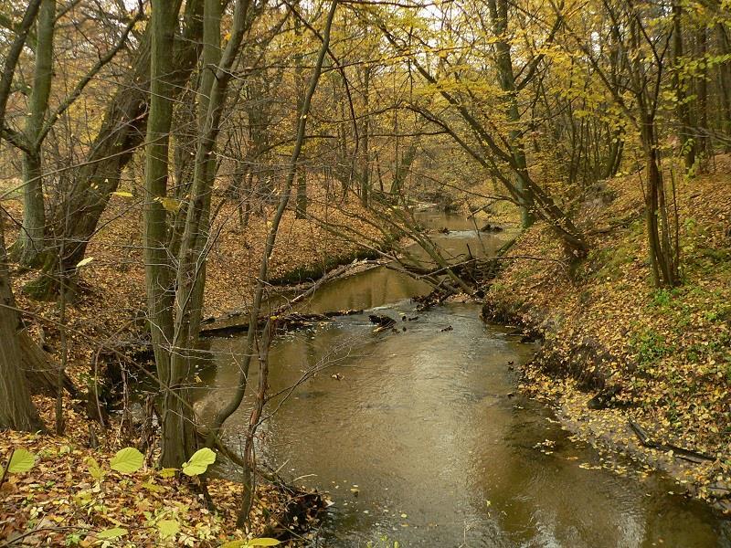 Mazowiecki Park Krajobrazowy  1