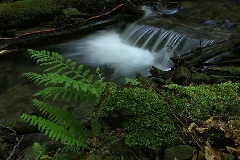 Rezerwat Tarnawa 3
