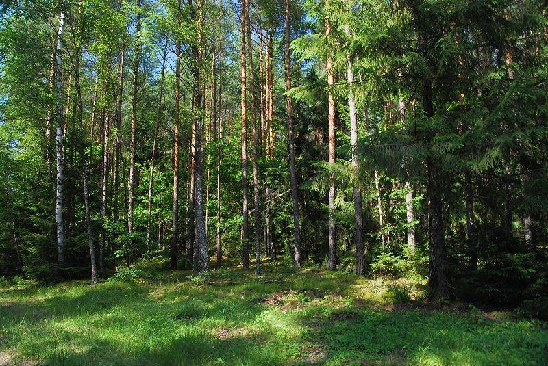 Puszcza Augustowska 1