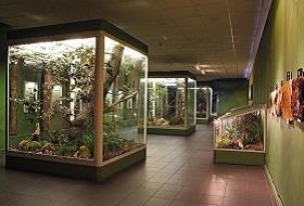 Muzeum Regionalne w Bytomiu
