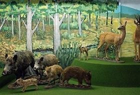 Muzeum Przyrodnicze BdPN