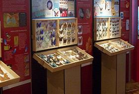 Muzeum Motyli Łeba