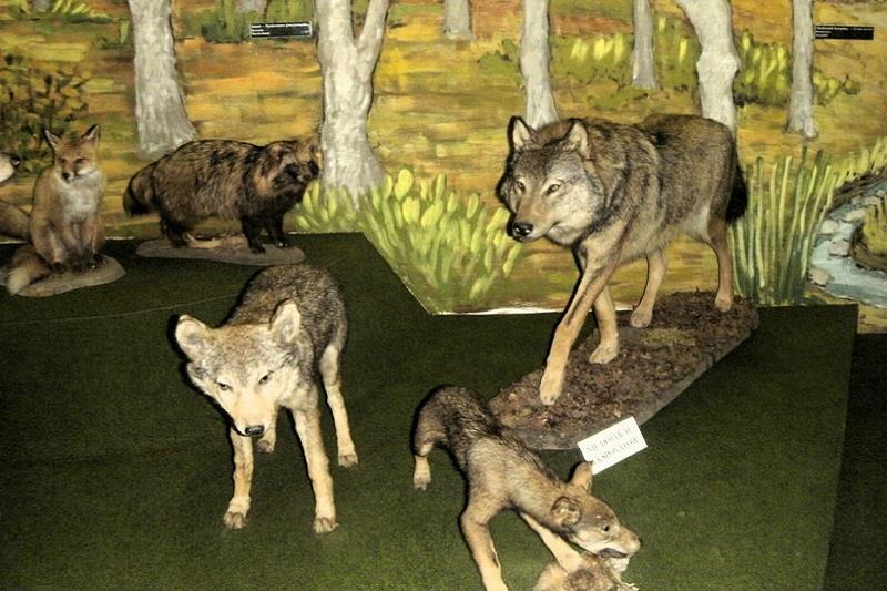 Muzeum Przyrodnicze BdPN 2