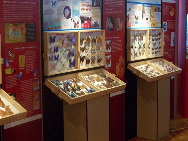 Muzeum Motyli Łeba 1