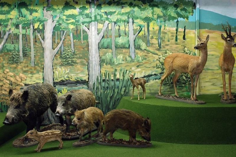 Muzeum Przyrodnicze BdPN 1