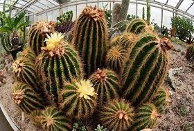Hodowla Kaktusów w Rumi